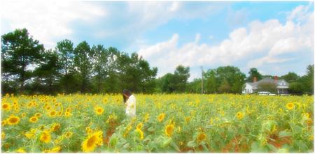 w_bvong_pix_sunflowers1.jpg