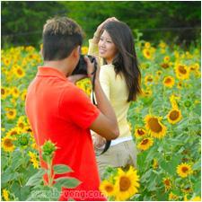 w_bvong_pix_sunflowers3.jpg