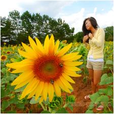 w_bvong_pix_sunflowers4.jpg