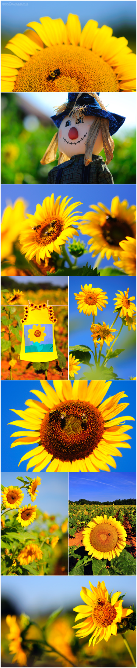 bvong_pix_sunflowers_09