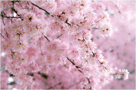w_b-vong.com_pix_spring_10_01