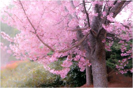 w_b-vong.com_pix_spring_10_02