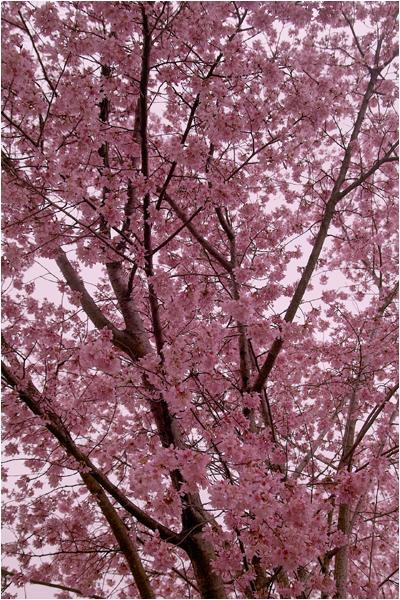 w_b-vong.com_pix_spring_10_04