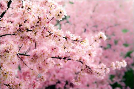 w_b-vong.com_pix_spring_10_05