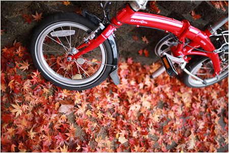 Red Dahon D3 Bicycle with Red Japanese Maple Leaves